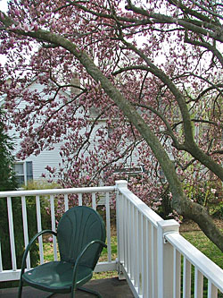 Spring while snuggled in the blossoms on the balcony at Currier House in Havre de Grace
